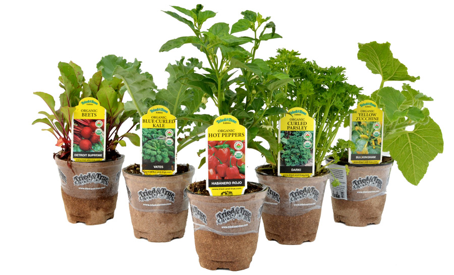 Tried & True Edibles are outstanding, garden-ready fruit, vegetable, and herb plants that will keep freshness at your fingertips.
