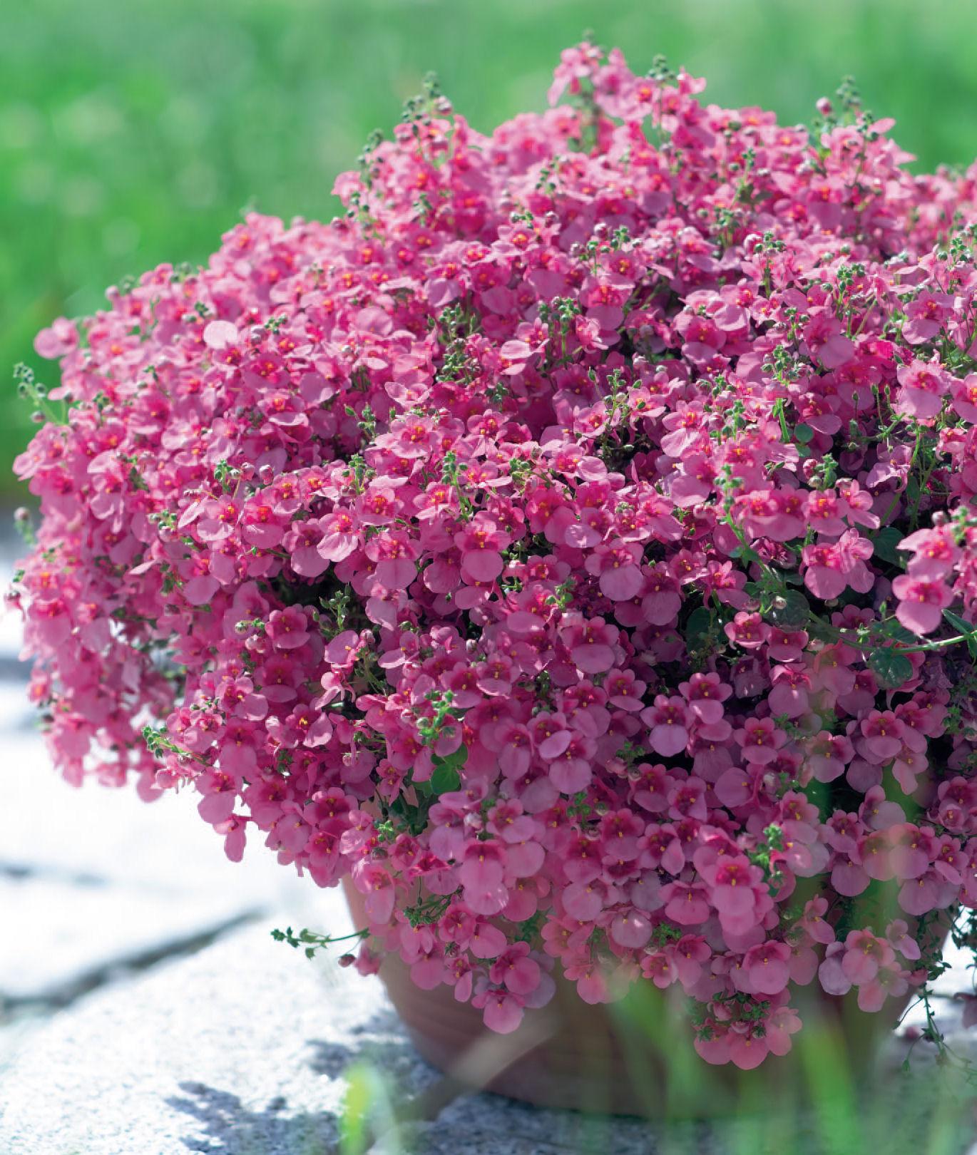 Living scandi fiori estivi che amano il sole for Piante che amano il sole
