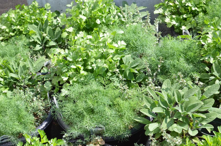Tried & True Herbs