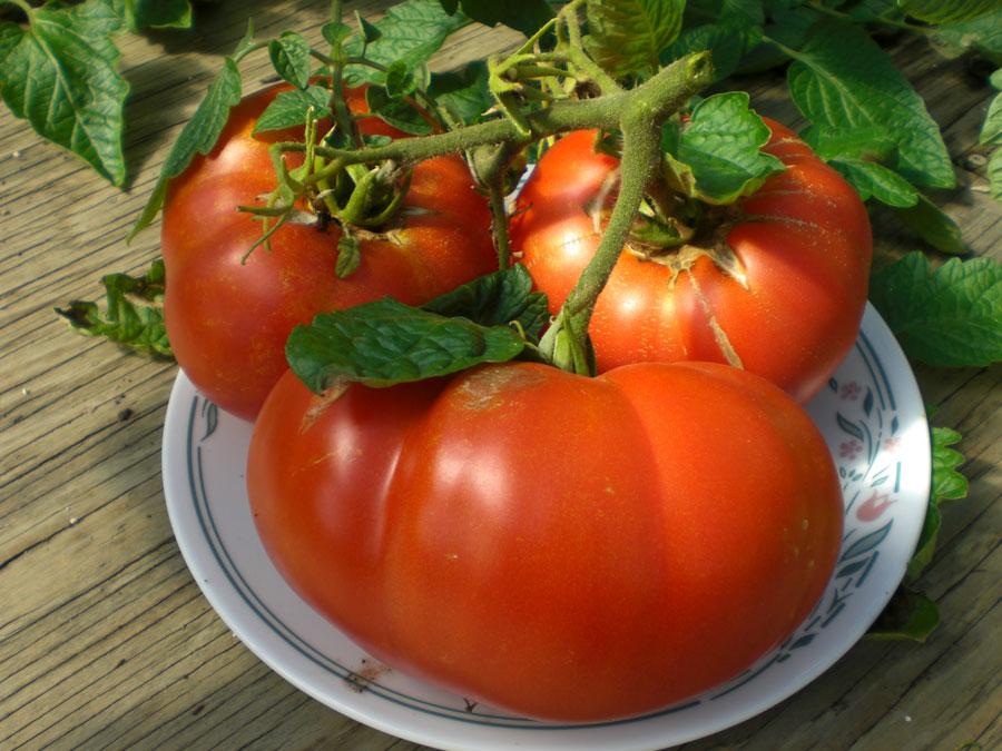 Cum poți obține roșii mai gustoase cu ajutorul altor plante din grădină