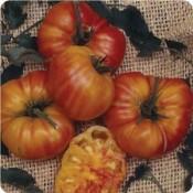 Tried & True Old German Heirloom Tomato