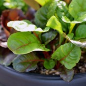How to Plant Tried & True Biodegradable Peat Pot