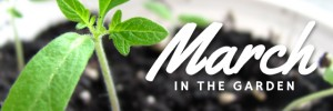 Garden tasks that you should be doing this March.