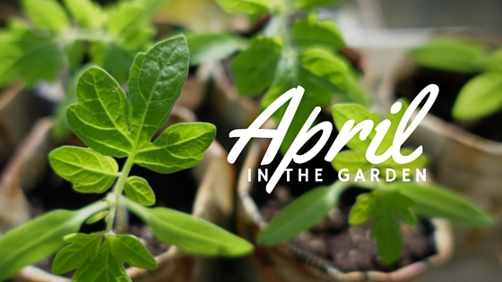 Garden tasks that you should be doing this April.