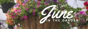 Garden tasks that you should be doing this June.
