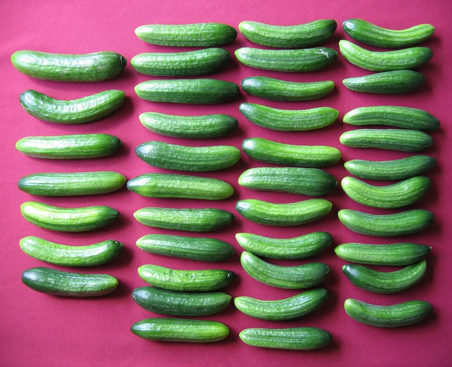 Cucumber Adam