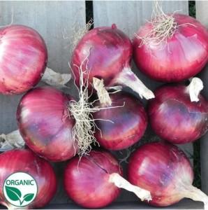 Onion Cabernet